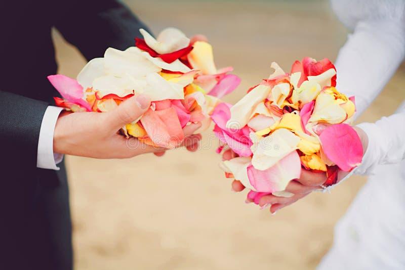 Pétalos color de rosa Wedding en manos imagen de archivo