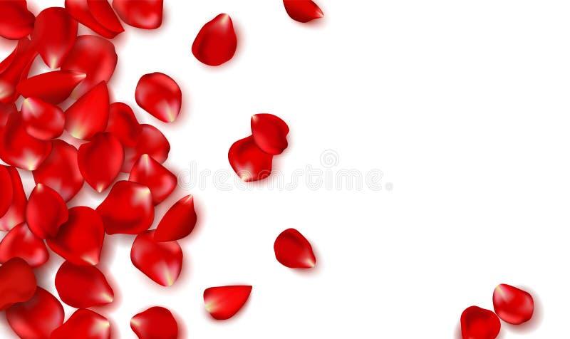 Pétalos color de rosa y gotas rojos en el fondo blanco Día de tarjetas del día de San Valentín feliz Ejemplo del día de fiesta de stock de ilustración