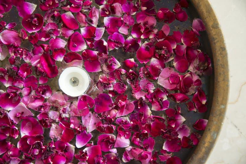 Pétalos de la flor en agua fotografía de archivo