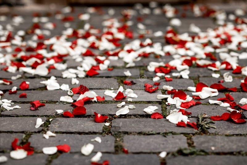 Pétalos de Rose en la tierra después de la ceremonia que se casa imagen de archivo