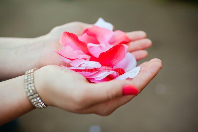 Pétalos de Rose en palmas foto de archivo