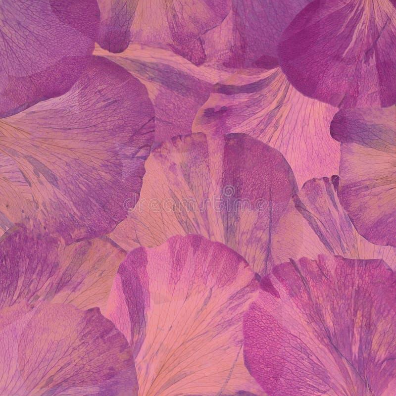 Pétalos grandes rosados de la peonía Visi?n desde arriba abstraiga el fondo libre illustration