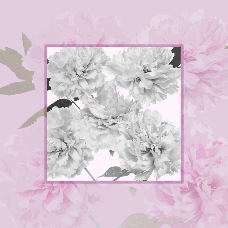 Pétalos púrpuras de la peonía libre illustration