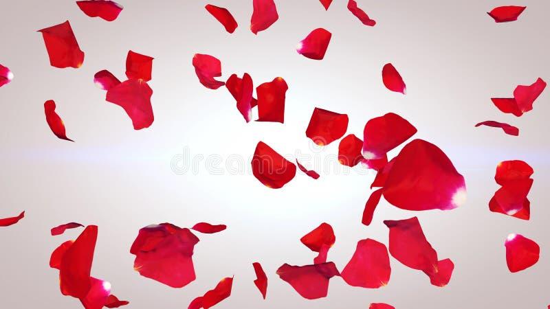 Pétalos que remolinan de rosas rojas fotos de archivo