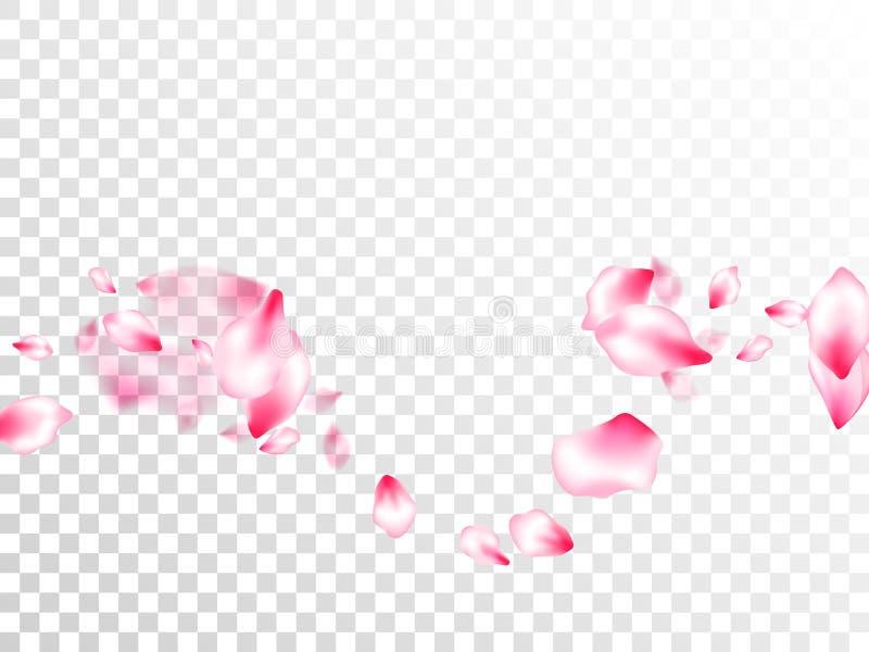 Pétalos que vuelan del rosa japonés de la flor de cerezo stock de ilustración