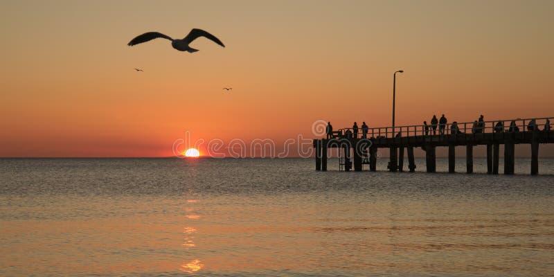 Pêche au coucher du soleil et aux mouettes photo libre de droits