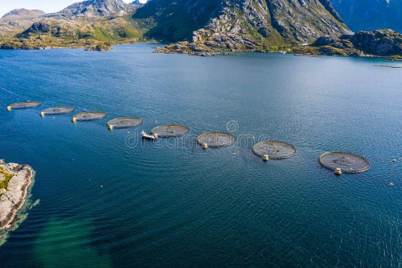 Pêche au saumon d'élevage en Norvège photo libre de droits