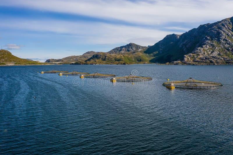 Pêche au saumon d'élevage en Norvège photo stock
