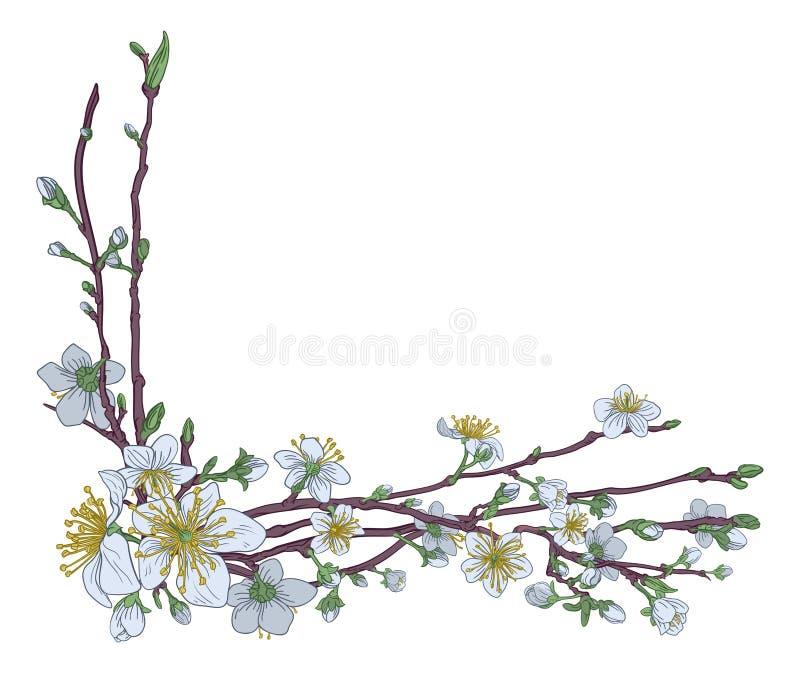 Pêche Cherry Blossom Flowers Corner Design illustration de vecteur