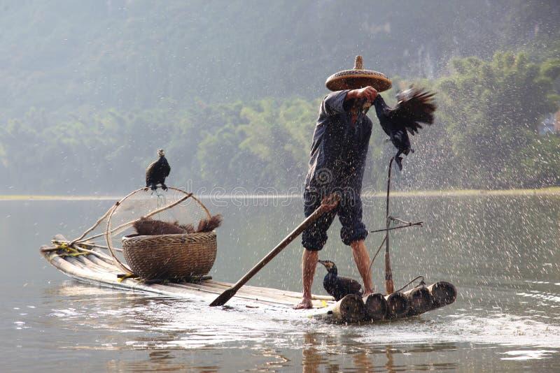 Pêche chinoise d'homme avec des cormorans images stock