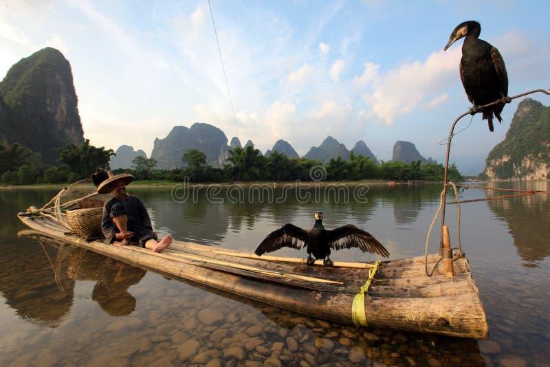 Pêche chinoise d'homme avec des cormorans photo libre de droits