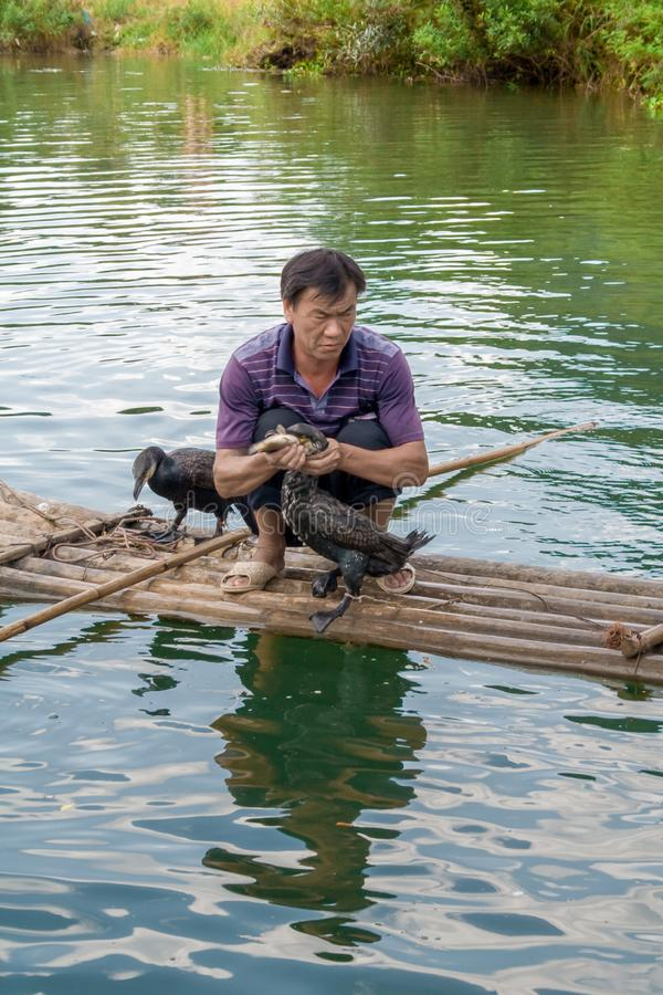 Pêche chinoise d'homme avec des oiseaux de cormorans dans Yangshuo, région de Guangxi La Chine photo stock