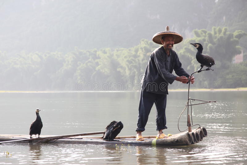 Pêche chinoise d'homme avec des oiseaux de cormorans dedans image libre de droits