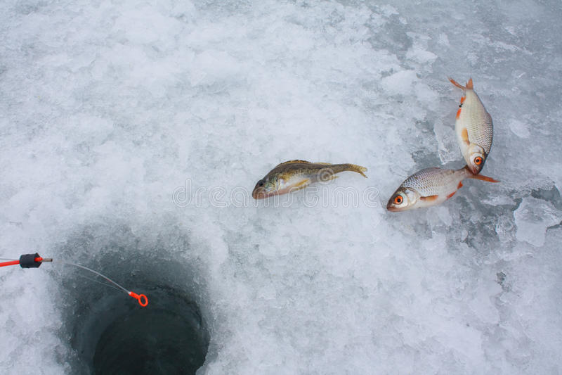 Pêche de glace photo libre de droits