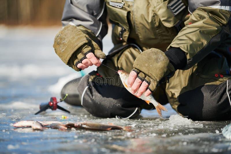 Pêche de l'hiver sur la glace Crochet de poissons de gardon dans des mains de pêcheur ou de pêcheur à la ligne photographie stock libre de droits