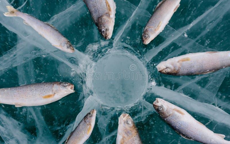Pêche de l'hiver sur le lac photo libre de droits