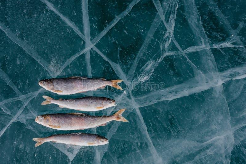 Pêche de l'hiver sur le lac photos libres de droits
