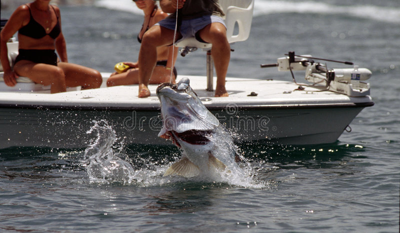 Pêche de tarpon image stock