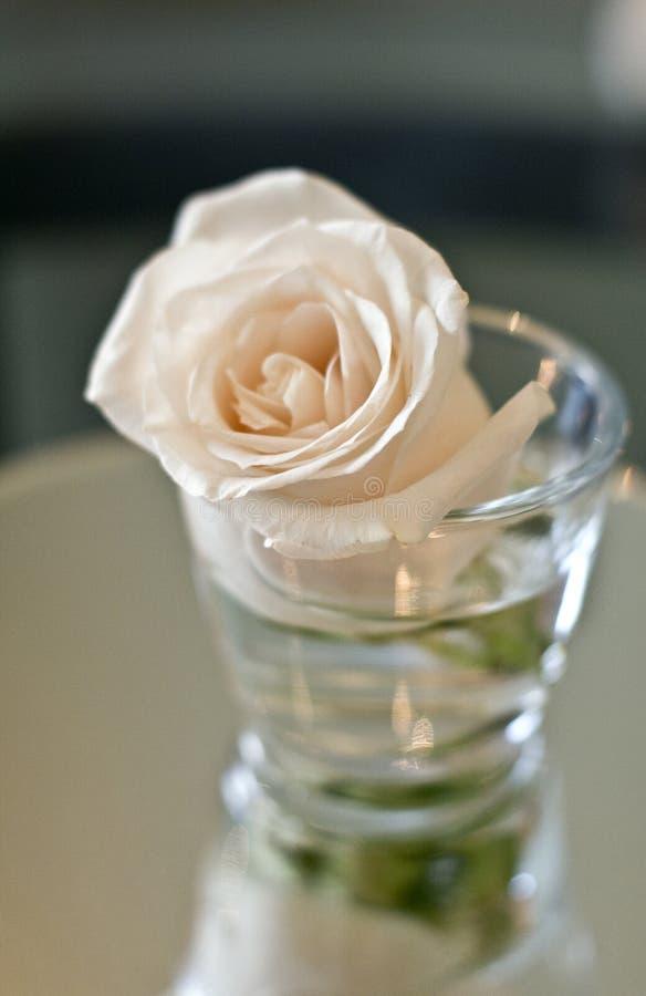 Pêche Rose en verre photographie stock