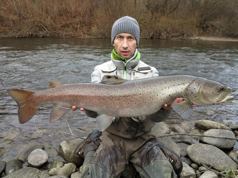 Pêche saumonée de hucho de Danube en Europe centrale photos stock