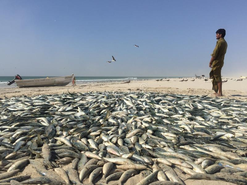 Pêche traditionnelle en Oman photographie stock