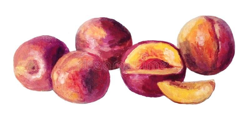 Pêches ou nectarines - peinture à l'huile d'isolement images stock