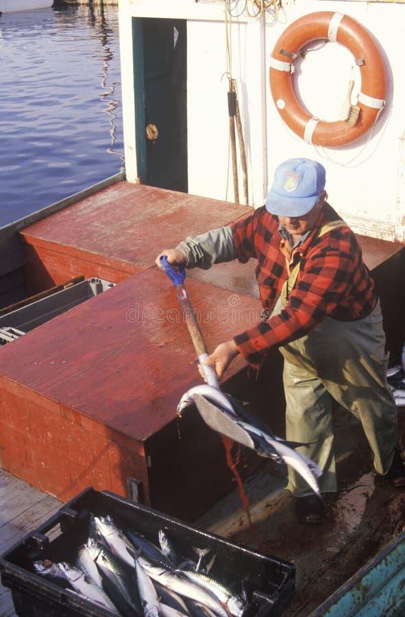 Pêcheur avec le loquet du maquereau images libres de droits