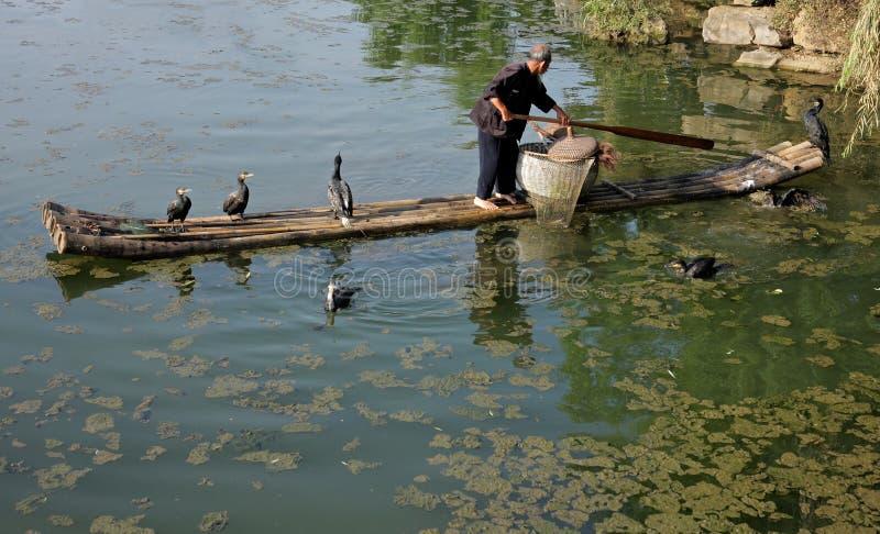 Pêcheur chinois de cormoran images stock