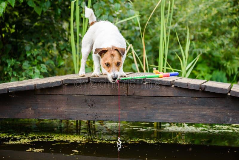 Pêcheur d'amateur regardant sur la canne à pêche et le crochet se reflétant dans l'eau immobile photo libre de droits