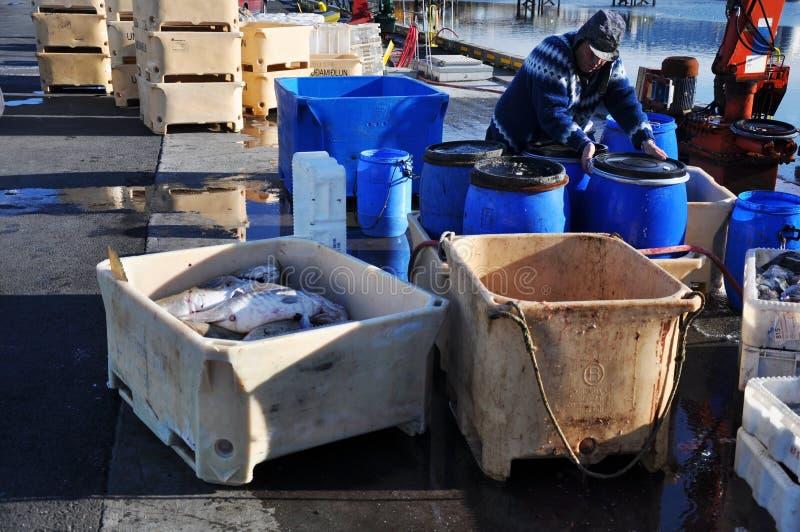 Pêcheur dans le port de Reykjavik, Islande photo libre de droits