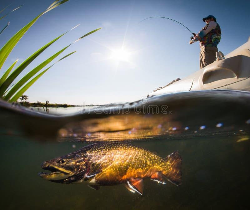Pêcheur et truite photo libre de droits
