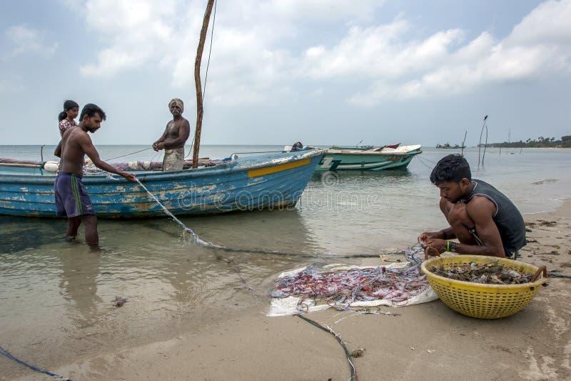 Pêcheurs et femmes rassemblant des mollusques et crustacés de leurs filets sur la plage de côte ouest sur l'île de Delft dans Sri photos stock
