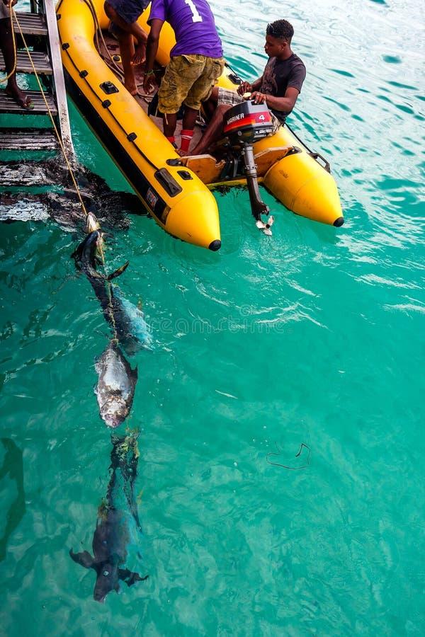 Pêcheurs sur le Cap Vert, Afrique photographie stock libre de droits