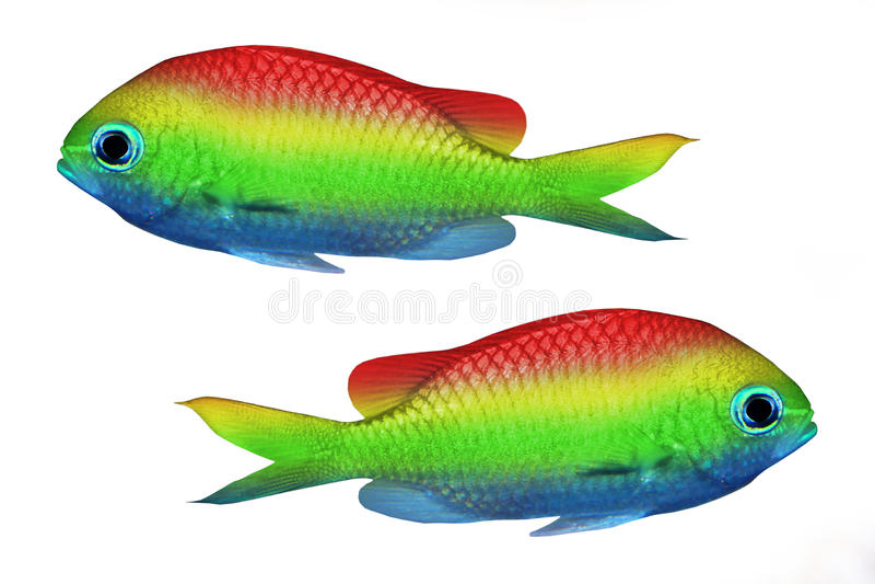 pêchez tropical images stock