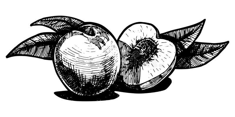 Pêssego ilustração stock