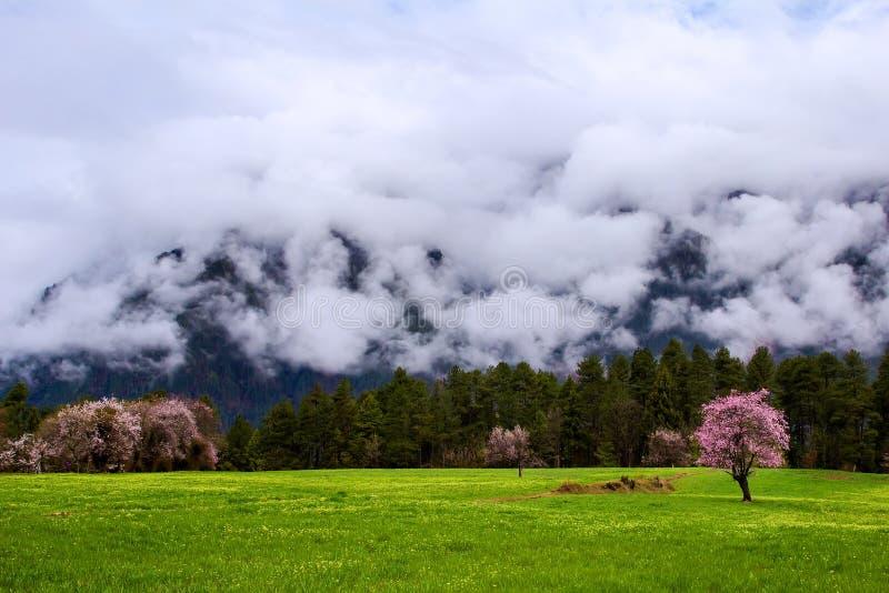 Pêssego e por do sol da montanha da neve de Nyingchi fotos de stock royalty free