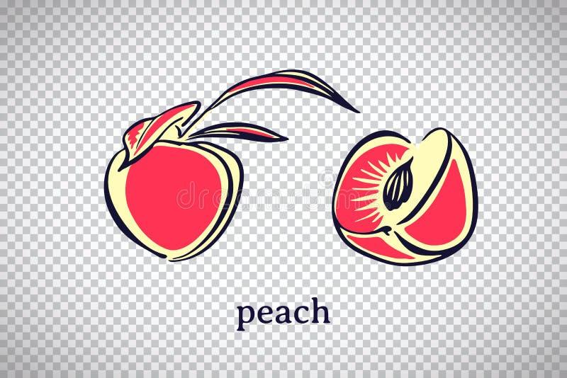 Pêssego estilizado tirado mão Fruto do vetor isolado no fundo transparente Ilustração gráfica para o logotipo ou o ícone ilustração stock