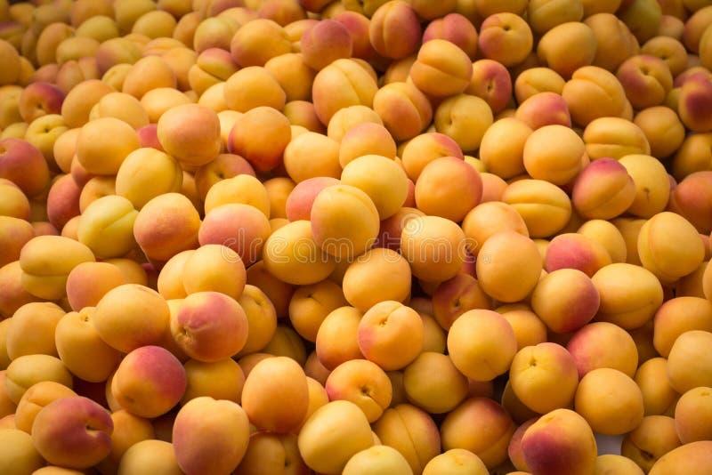 Pêssegos amarelos pequenos - fundo do mercado de fruto imagem de stock royalty free