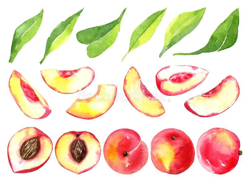 Pêssegos maduros suculentos Frutos cortados isolados no fundo branco Desenho saudável do alimento do verão Aquarela desenhado à m ilustração royalty free