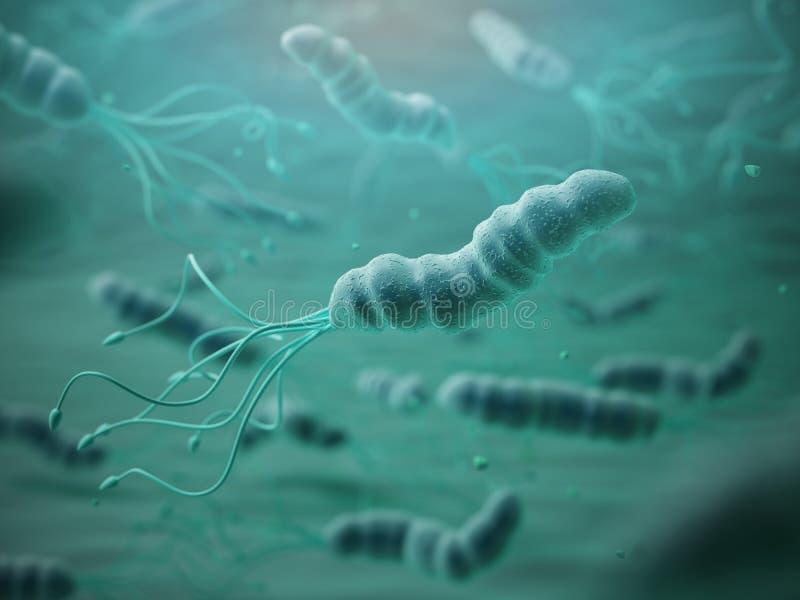 Píloros de Helicobacter en microscopio Bactreiias ilustración del vector