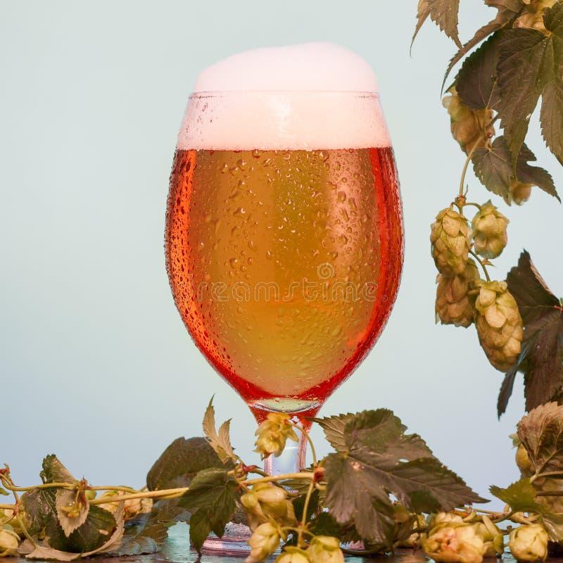 Pół kwarty piwo z składnikami dla domowej roboty piwa na błękicie obraz stock