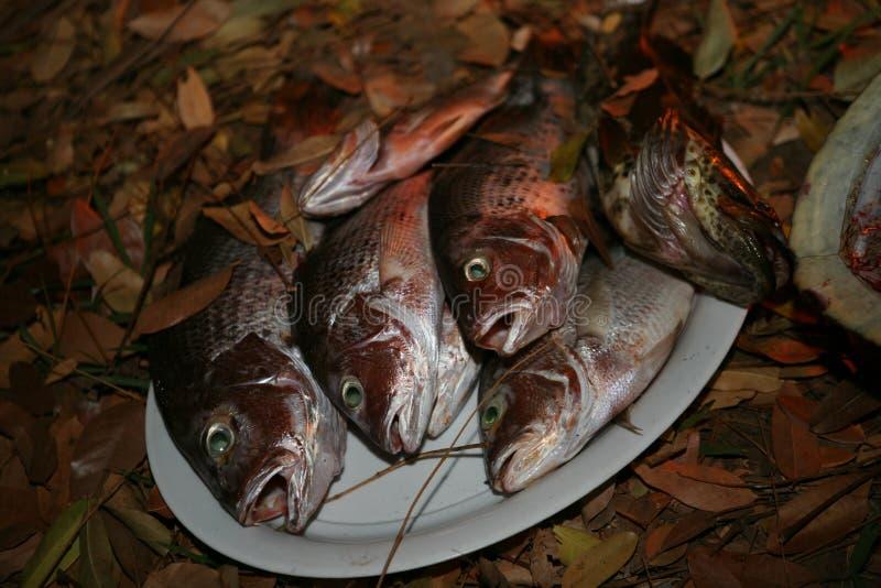 Półmisek świeżo złapana fotografa i dorsza ryba na ziemi w liściach obrazy royalty free