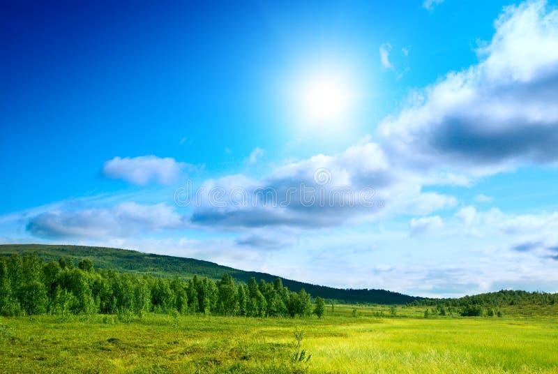 północna tundra zdjęcie stock