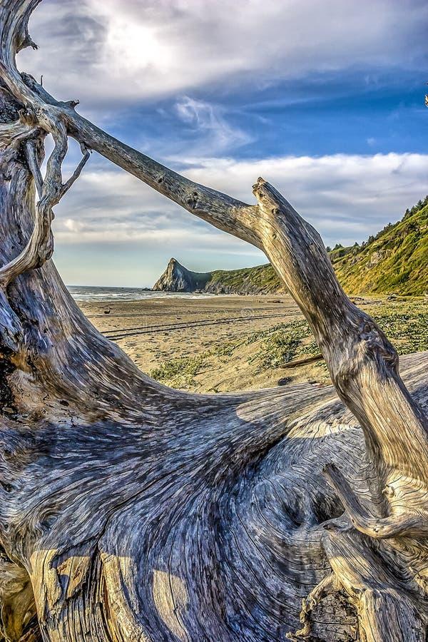 Północnego Kalifornia wybrzeże obrazy stock