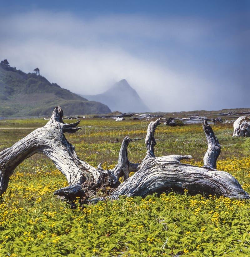 Północnego Kalifornia wybrzeże zdjęcia royalty free