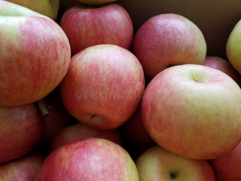 Północnego szpiega jabłka dla sprzedaży zdjęcie stock