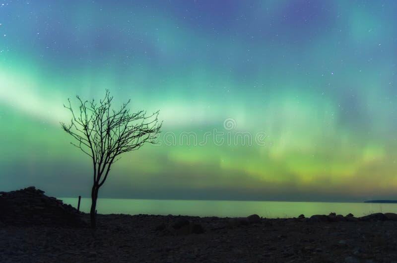 Północni światła i osamotniony drzewo na St Patrick& x27; s dzień fotografia royalty free