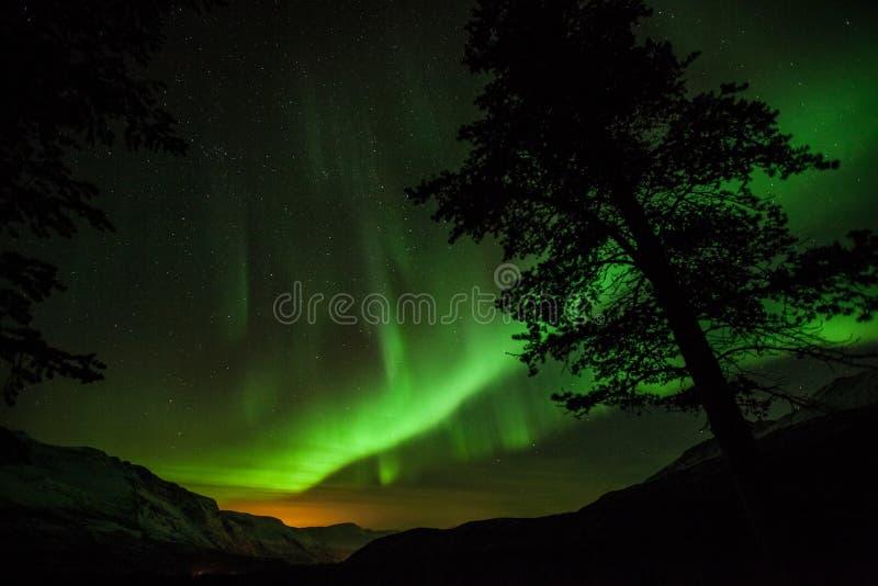 Północni światła w Szwecja lesie zdjęcia royalty free