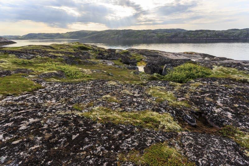 Północny biegunowy lato Linia brzegowa Barents morze, Arktyczny ocean, Kola półwysep, Rosja obraz stock