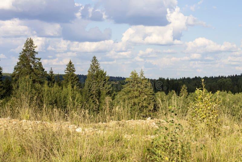 Północny drewno zdjęcie royalty free